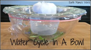 Water Cycle In A Bowl