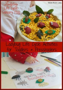 Lady But Life Cycle Sensory Play