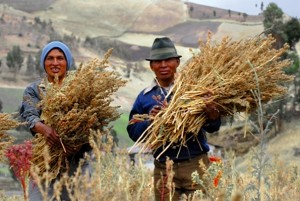 Certified fair trade quinoa producers in Ecuador. Photo credit: Wikimedia Commons